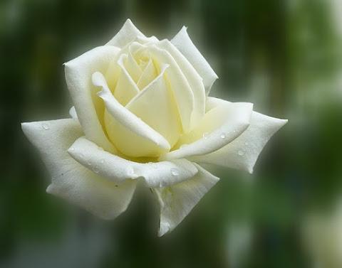 Por Qué Las Flores Tienen Tanta Importancia En El Arte Cristiano
